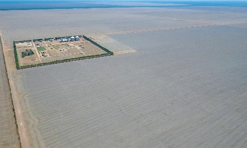 Revealed: UK supermarket and fast food chicken linked to deforestation in Brazil
