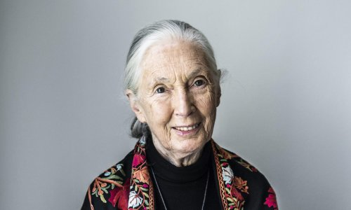 Jane Goodall on fires, floods, frugality and the good fight: 'People have to change from within'