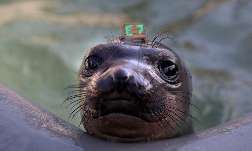 Man sentenced for shooting protected elephant seal dead on California coast