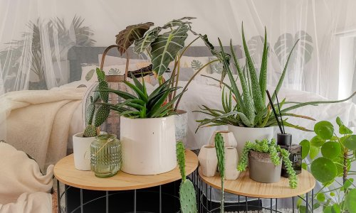 Why the young ones really love houseplants
