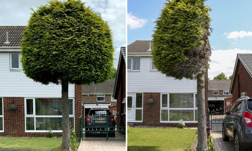 Cut-down conifer becomes Sheffield attraction after neighbour dispute