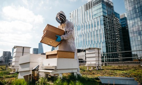 'Honeybees are voracious': is it time to put the brakes on the boom in beekeeping?