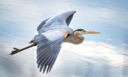 The gift of a heron provoked which war? The Weekend quiz