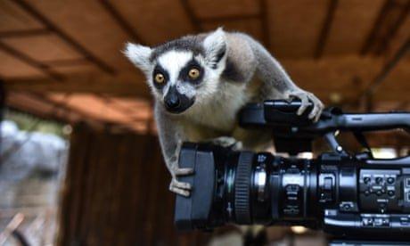 Floods, fires and a cheeky lemur: Monday's best photos