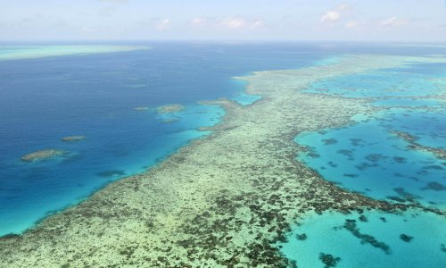 Australia and 11 other countries lobby Unesco over Great Barrier Reef decision-making