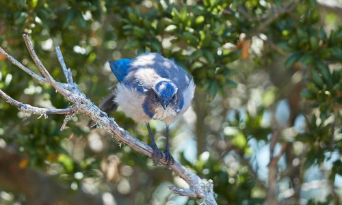 Noisy environments can have detrimental effect on plants, study finds