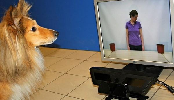 狗会注意我们在看哪里吗?| 果壳 科技有意思