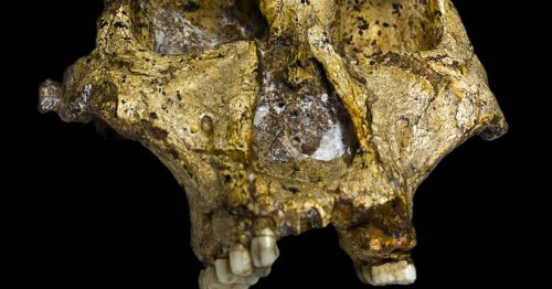 Study Debunks Theory That Earliest Humans Lived on Nuts and Seeds