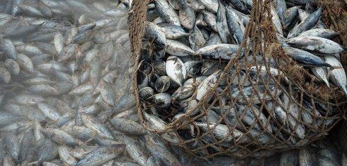 Seaspiracy Harms More Than It Educates