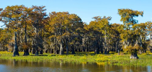 Scoping Out the Gulf of Mexico's Secret Submerged Forest