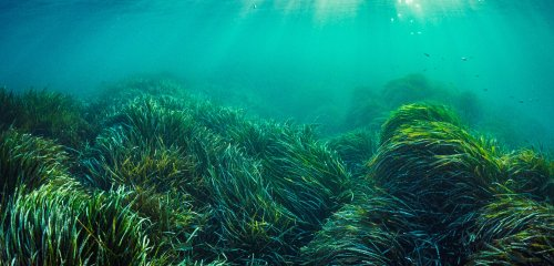 Noise Pollution Affects Practically Everything, Even Seagrass