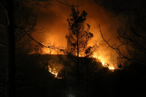Adana, Antalya ve Mersin'de yangınlar devam ediyor: Müdahale sürüyor