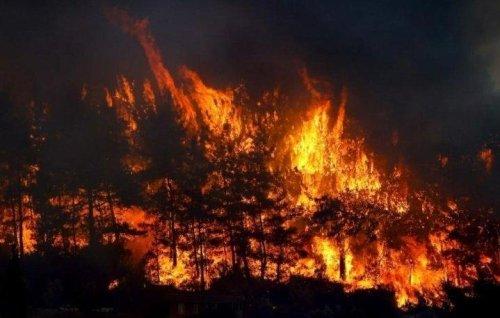 Samsun'da orman yangını: 7 hektarlık alan zarar gördü