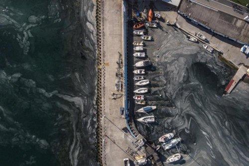 İstanbul'da müsilaj istilasının son hali görüntülendi