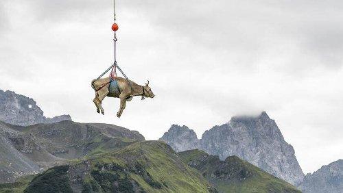 Warum Schweizer helvetische Aktien lieben | HZ