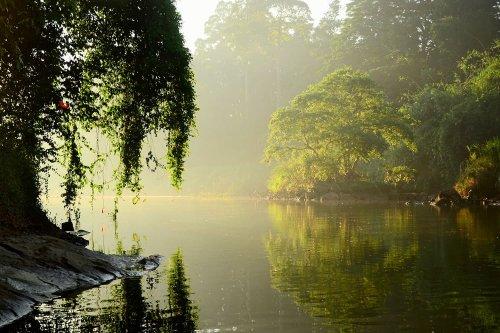 Flood Plains National Park, Sri Lanka: vegetações e fauna