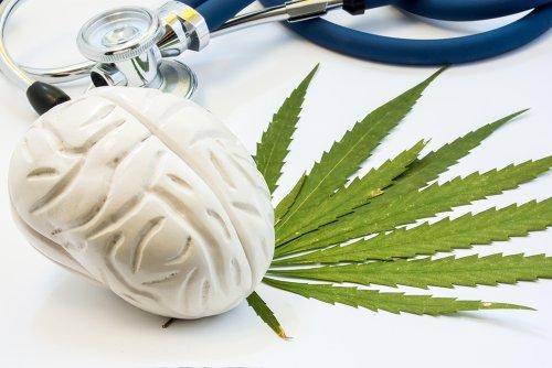 Cannabis and the Brain
