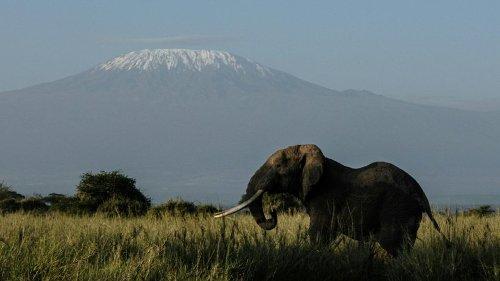 Weltweiter Hunger auf Avocados bringt Kenias Elefanten in Bedrängnis