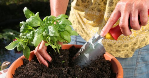 Kräutertopf für den Balkon: Tipps zum Bepflanzen - DAS HAUS