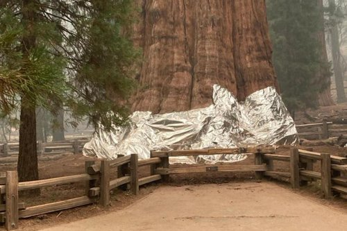 General Sherman tree safe as firefighters work furiously protect Giant Forest from KNP Complex blaze