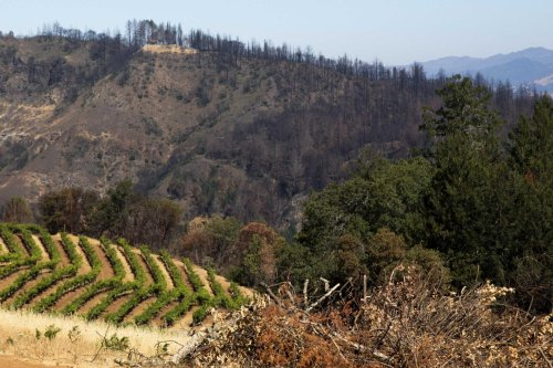 Winemakers and farmers should be able to get wildfire insurance more easily, state's commissioner says