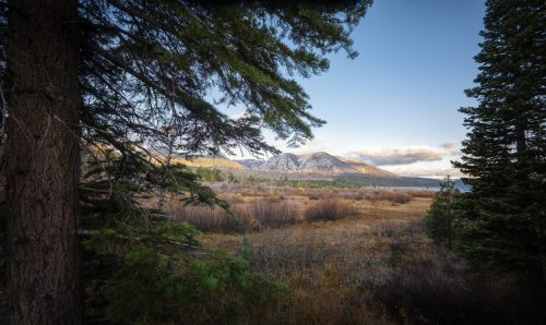 Some areas of South Tahoe closed due to animals with plague