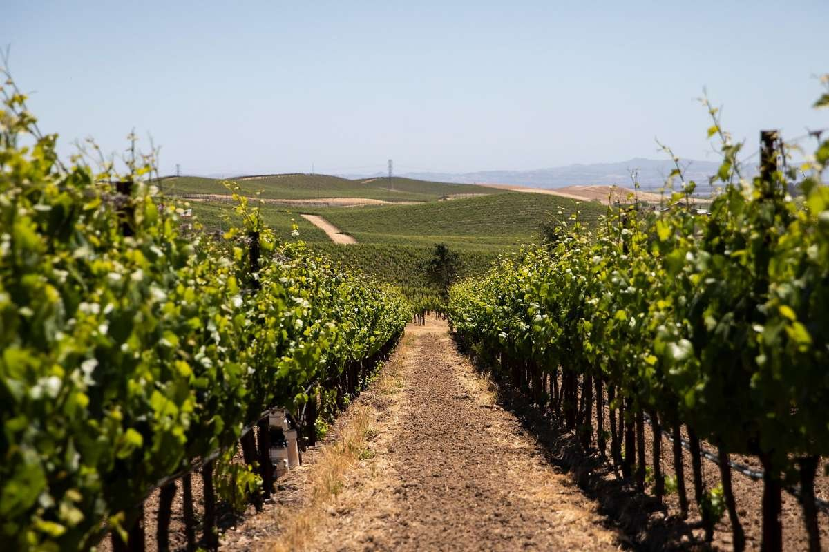 Best 25 Wineries: Where to go wine tasting in Napa and the Bay Area, Summer 2021