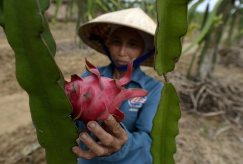 China halts Vietnam's $1 billion dragon fruit trade over COVID