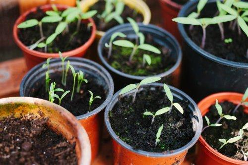5 houseplants that double as alternative medicine