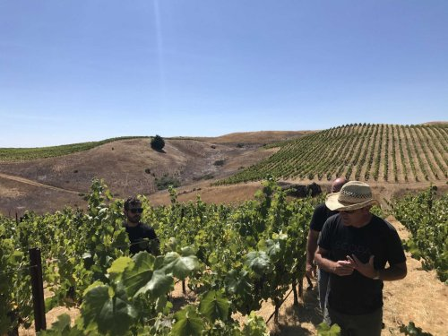 Two wine superstars just bought 162 acres of what some consider California's best Syrah vines