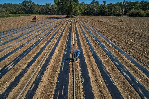California's farmers are already taking drastic measures to conserve water