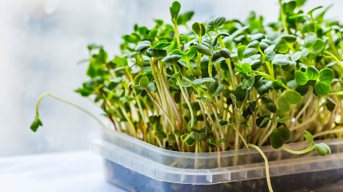 The Real Health Benefits Of Microgreens