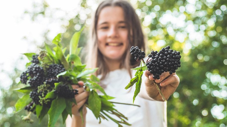 This Is What Happens When You Take Elderberry Every Day