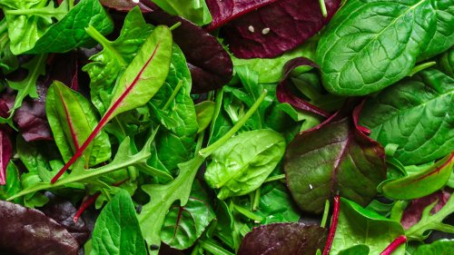 Arugula Vs Spinach: Which One Should You Choose?