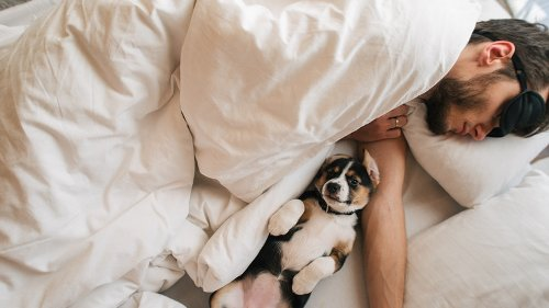 When You Sleep With Your Dog, This Is What Happens To Your Body