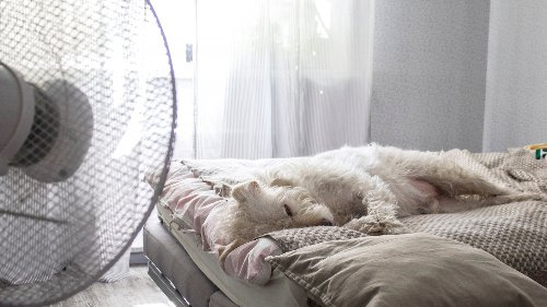 Sleeping With A Fan On Might Be Bad For You. Here's Why