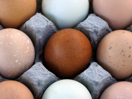 Brown vs White Eggs — Is There a Difference?