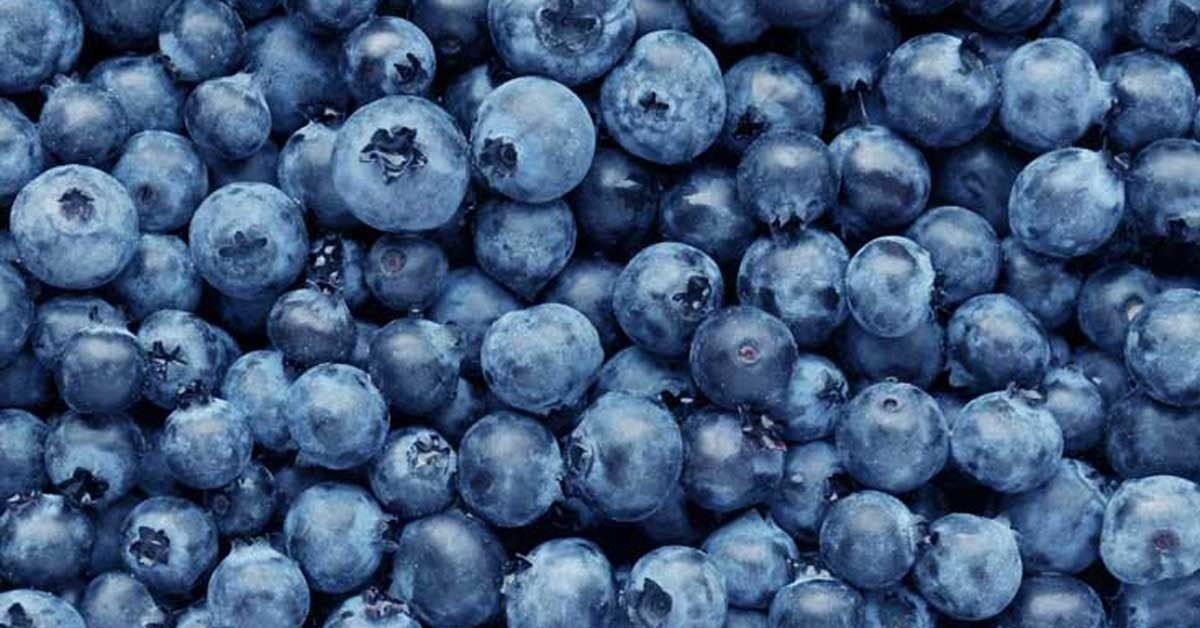 Blueberries 101: Nutrition Facts and Health Benefits