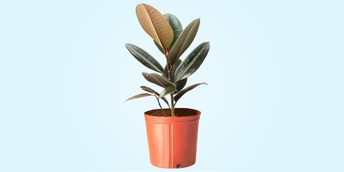 The 12 Best Indoor Plants That You Probably Won't Kill