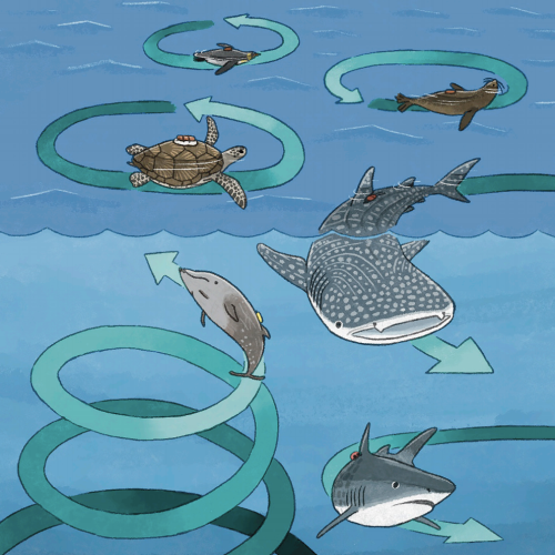 Sharks, Turtles, and Penguins Are All Swimming in Circles. No One Knows Why.