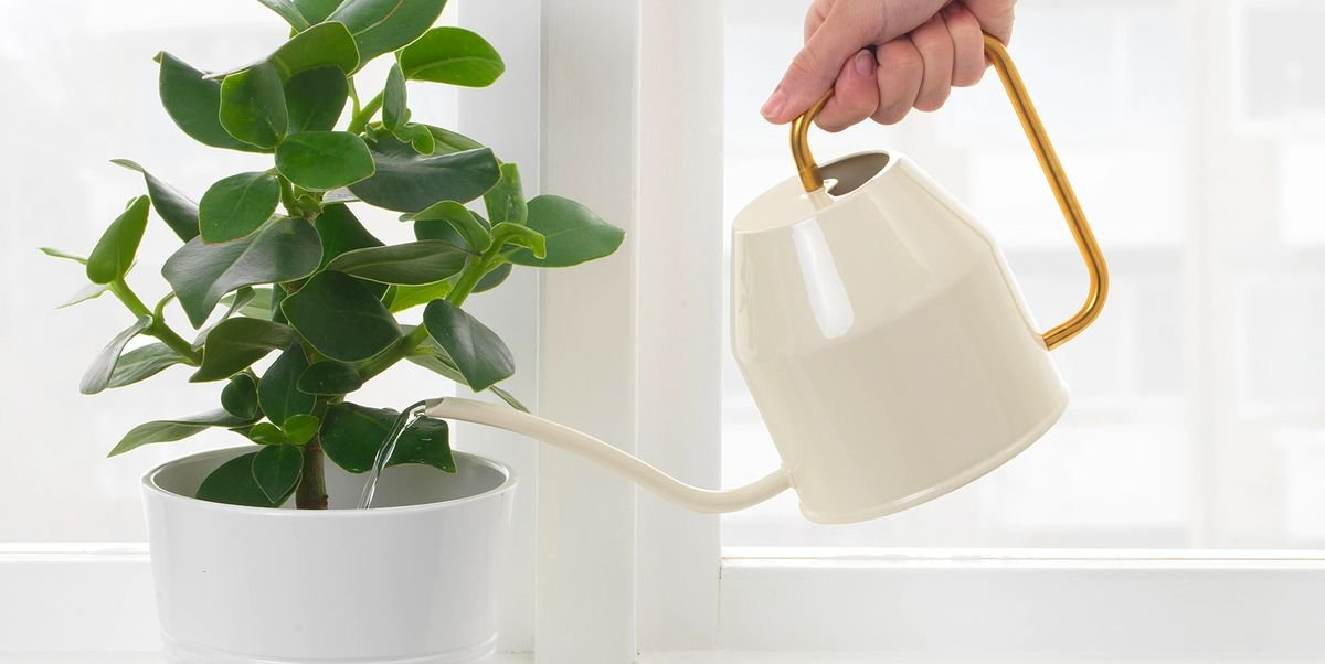The Best Houseplant and Gardening Gear for an At-Home Jungle