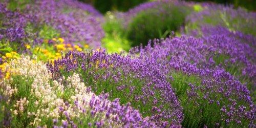 8 Flowering Herbs That Look Beautiful and Taste Great