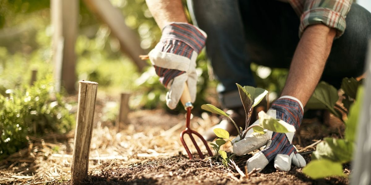 The 8 Gardening Tools You Should Know