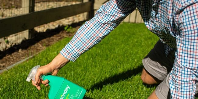 Want a Plush Green Lawn Without the Pesticides? Buy This