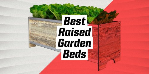 The 9 Best Raised Garden Beds for Easy Planting