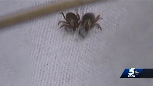 Looking at steps you can take to lower chance of getting tick-borne illness this summer