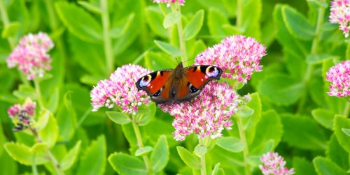 29 Flowers That Attract Butterflies to Your Yard