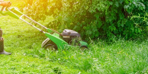 Here's why you shouldn't mow your lawn this month