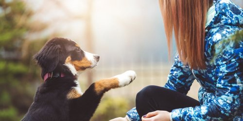 Professional Training Tips Every Puppy Parent Should Follow