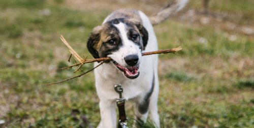15 common myths about dogs: true or untrue